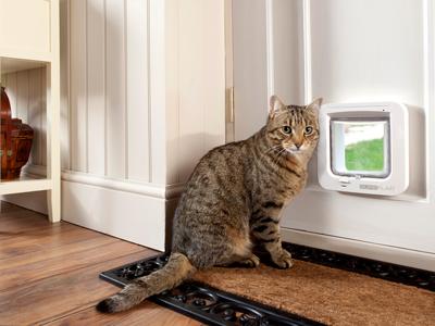 Pet Door Installation Cambridge Dog Cat Doors Waikato